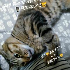 猫/暮らし  こんにちは(*^^*) うちの長男(Φ…
