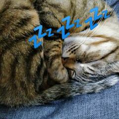 猫と暮らす/暮らし  おはようございます(*^^*)  たま…