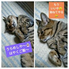 猫と暮らす   こんにちは(*^^*)  夏恒例のう…