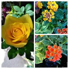 ガーデニング/花   こんにちは(*^^*)  花🌼が咲い…