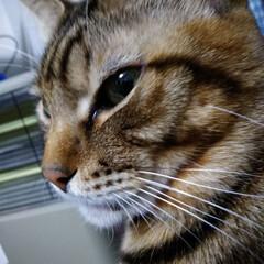 フォロー大歓迎/猫/にゃんこ同好会 にゃんにゃんにゃん(ΦωΦ) の日💕💕 …