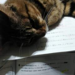 ペット どれどれ 数学? 😼が おしえてやるよ!…(2枚目)