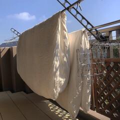 晴れた日の仕事/布団干し/布団 昨日のお布団干し。 晴れている間に干さな…