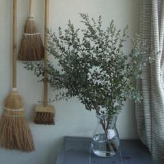 ブラシ/部屋に花を飾る/ドライフラワー/ユーカリグニー/わたしのお気に入り お気に入りの植物。 小さいユーカリの葉っ…