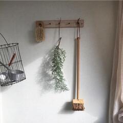 ディスプレイ/クリスマス/飾り/もみの木/クリスマスツリー もみの木ひと枝 先日行ったお店では、クリ…(1枚目)