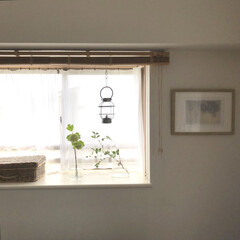 出窓/花のある暮らし/風景/暮らし/わたしのお気に入り お気に入りの部屋の風景。 リビングの出窓…