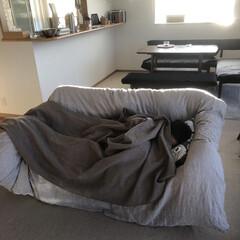 息子/羽毛布団/ソファ 起きてきたのに すぐにソファで眠る息子^…