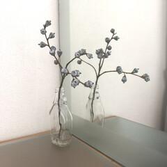 飾る/花/ユーカリクロボラス/ドライフラワー/わたしのお気に入り ユーカリクロボラスのドライ ユーカリの中…
