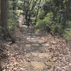 お散歩/森林浴/小径/春のフォト投稿キャンペーン/おでかけワンショット 森の小径 木々の中を歩くとリフレッシュで…