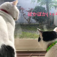猫ちゃん/猫/ペット
