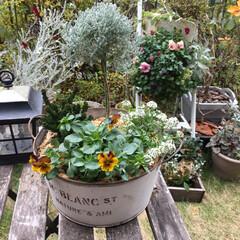寄せ植え/温室/イケア 友達の誕生日に渡したいと思って寄せ植え作…