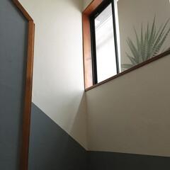階段/ペンキ塗り/錆色/DIYペンキ/漆喰壁/DIY/... ペンキ塗り 仕上がりました! \(^o^…