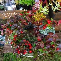 ビッグベリー/カルーナブルガリス/寄せ植え/リース/ガーデニング/イケア こんにちは! 今日は暖かくてガーデニング…