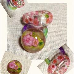 桜/お花見/雑貨/100均/セリア/ダイソー/... 桜のぽってりした😆指輪と、 リング用ドー…