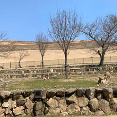 石段の模様/二月堂/春日大社/奈良公園/LIMIAおでかけ部/建築/... 奈良の春。(8枚目)