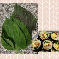 エゴマ サカタのタネ(葉菜)を使ったクチコミ「エゴマの葉っぱが手に入ったので、キンパつ…」(1枚目)