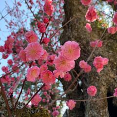 石段の模様/二月堂/春日大社/奈良公園/LIMIAおでかけ部/建築/... 奈良の春。