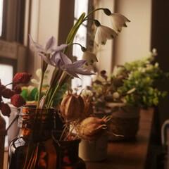 リビング/お庭のお花/吹奏楽部/定期演奏会/DIY/100均/... 昨日、お庭に咲いていた お花をリビングに…