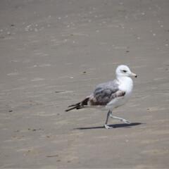 ハンティントンビーチ/西海岸/GW/LIMIAおでかけ部/わたしのGW アメリカ西海岸 ハンティントンビーチ  …(2枚目)