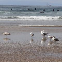ハンティントンビーチ/西海岸/GW/LIMIAおでかけ部/わたしのGW アメリカ西海岸 ハンティントンビーチ  …(1枚目)
