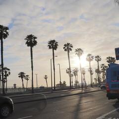 西海岸/ハンティントンビーチ/ヤシの木/GW/トイレ/おでかけ/... サンセット前のハンティントンビーチ ブル…