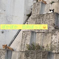 ネコ (1枚目)