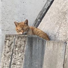 ネコ (2枚目)