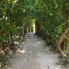 自然/パワースポット/森林浴/散歩/沖縄/フクギ並木/... 沖縄旅行 沖縄へ行ったら訪れる人も多いか…
