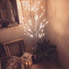 リビング/ライトアップ/シラカバツリー/クリスマス/クリスマスツリー/雑貨/... クリスマスがやってきた 🎄🎄🎄  20年…