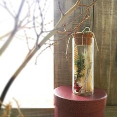 クリスマス雑貨/パンパスグラス/オブジェ/クリスマスボトル/クリスマス/ハンドメイド/... クリスマスボトル🎄  コルク瓶の中にはク…