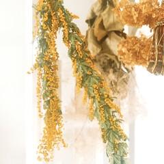 花のある暮らし/タッセル/mimosa/ミモザ/キッチン/住まい/... mimosa  こちらのミモザはドライに…
