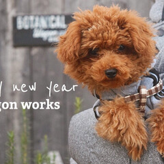 あけおめ/フォロー大歓迎/冬/ペット/ペット仲間募集/犬/... あけまして おめでとう ございます🎍  …