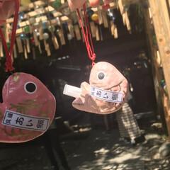 川越氷川神社 (5枚目)