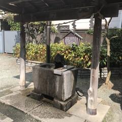 川越氷川神社 (2枚目)
