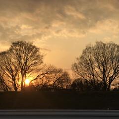 夕陽/風景 冬の樹々が ウチワサンゴに見えて、静かな…