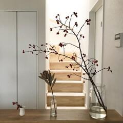 インテリア/枝/切り花/植物/秋 ✳︎ キッチンからの景色。 秋になると、…