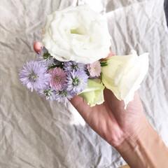 トルコキキョウ/お花/切り花/切花 ✳︎ ご近所さんに頂きましたお花。 トル…