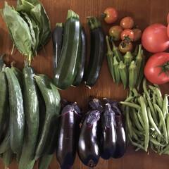 収穫/バジル/ミニトマト/トマト/大葉/つるなしインゲン/... 今年の夏は汗だくになりながら家庭菜園の収…
