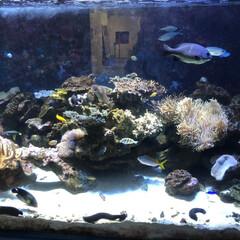 フォロー大歓迎/LIMIAおでかけ部 自然博物館にある水槽♬  夏休みのネタも…