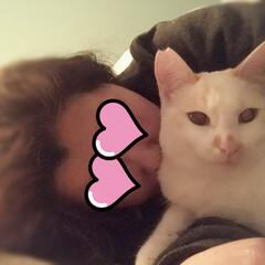 かぎしっぽ/白猫/保護猫/ペット仲間募集/猫/にゃんこ同好会 昨夜の満福    幸せのひと時💗  しば…