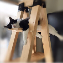 キャットタワーDIY/満福君/白猫/もんじ君/ハチワレ猫/保護猫/... 久しぶりの投稿です。 各々いつもの場所で…(1枚目)