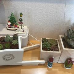多肉ちゃん/多肉寄せ植え/ありがとう/りみ友ちゃんからのプレゼント/キッチンカウンター上/クリスマス2019/... キッチンカウンターに クリスマス🎄ディス…(4枚目)