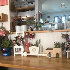 多肉ちゃん/多肉寄せ植え/ありがとう/りみ友ちゃんからのプレゼント/キッチンカウンター上/クリスマス2019/... キッチンカウンターに クリスマス🎄ディス…