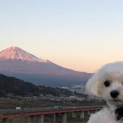 わし/マルチーズ/夕方/赤富士/富士川サービスエリア/富士山/... 今日は 富士山🗻連投します🙇♀️ 帰り…