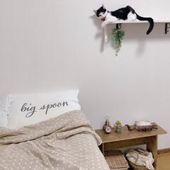 寝室インテリア/猫のいる暮らし/キャットウォークDIY/キャットウォーク/DIY/インテリア キャットウォークDIY