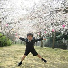 男の子/ランドセル/一年生/春/桜/春の一枚/... 満開の桜の木の下で🌸  ピカピカのランド…