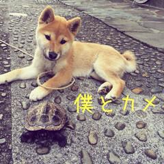 亀を近づけるとビビる犬 見かけも大きさも性別も違うけど、仲良しな…