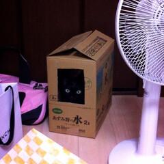 黒猫 部屋で視線を感じたのですが、最初は何処か…