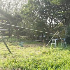 コロナ/アスレチック/ロープ/竹/DIY/ハンドメイド 冗談半分で作ってみたスラックライン。とて…