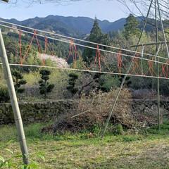 コロナ/アスレチック/竹/ロープ/DIY/ハンドメイド モンキーブリッジというアスレチック。これ…